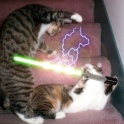 Cats with lightsabers 9