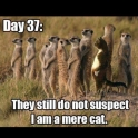 Day 37 They still do not suspect I am a mere cat