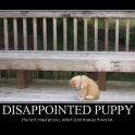 Disappointed Puppy2