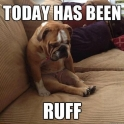 Dog has a ruff day