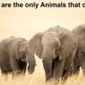 Elephants are the only animals that cant jump