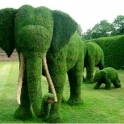 Even the Elephants are doing their bit to stay green