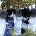Five cute kittens in socks
