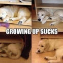 Growing up sucks2