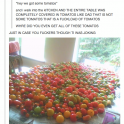 Hay we got some tomatos