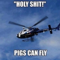 Holy Shit pigs can fly
