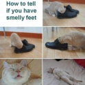 How to tell if you have smelly feet