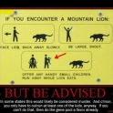 If You Encouter A Mountain Lion