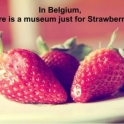 In Belgium there is a museum just for Strawberries
