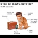 Is your cat about to leave