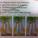Its true about Giraffes