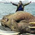 Just a walrus on a submarine