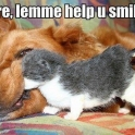 Kitten helping dog smile