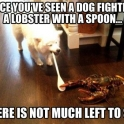 Lobster battles dog for control of the spoon of power