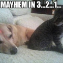 Mayhem in 3...2...1...