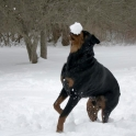 Never bring a dog to a snow fight