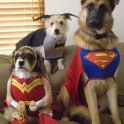 Puppy Justice League