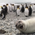 Seal Loving the photobomb