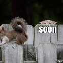 Soon my Squirel