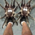 Spider Slippers