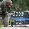 Squirrel Movie Makers
