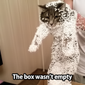 The box wasnt empty