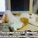 They named their cat Windows
