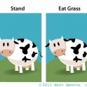 Tricks to teach your pet cow