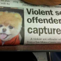 Violent sex offender captured