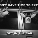 We dont have time to explain GET IN THE CAR