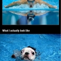 What I think I look like swim fail