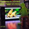 What happens to Kermit when Miss Piggy is away