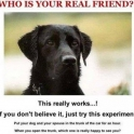 Whos is your real friend