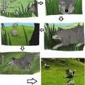 Why wolves stalk sheep