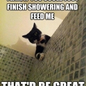 Yeah if you could just finish showering and feed me