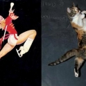 cats that look like pin up girls 10