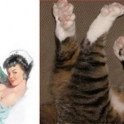 cats that look like pin up girls 11
