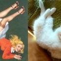 cats that look like pin up girls 12