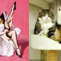 cats that look like pin up girls 6