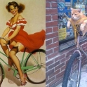 cats that look like pin up girls 7