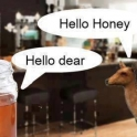 honey dear