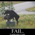 moose epic fail2