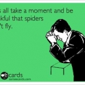 thankful that spiders do not fly