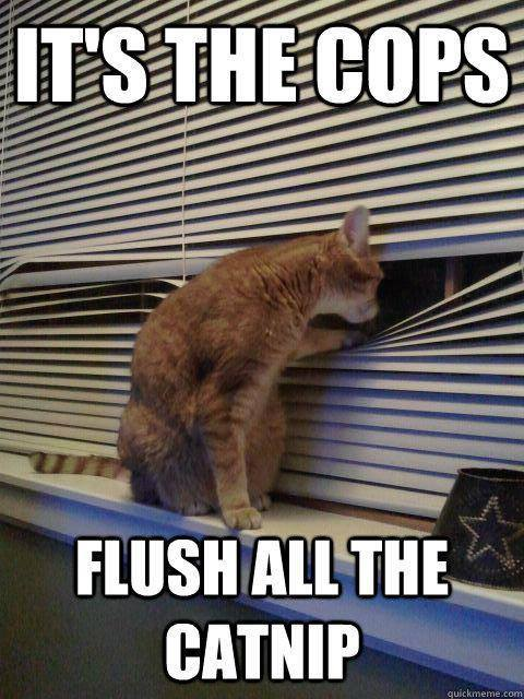 flush the catnip